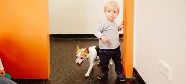 Kennels & Pet Boarding in Glen Iris & surrounds