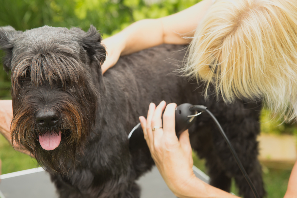 Pet Grooming in Glen Iris & surrounds