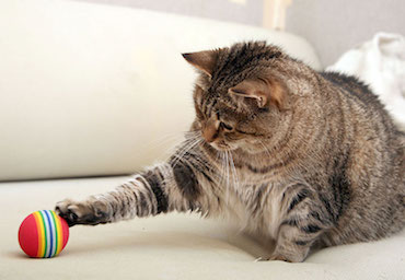 How To Exercise My Cat | Glen Iris Vet