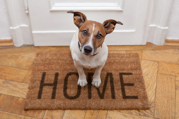 Pet-proofing your home