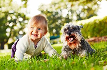 Puppy Pre-School | Glen Iris Vet