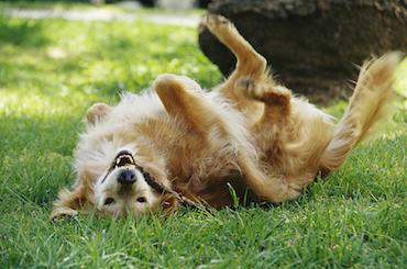 9 Common Causes of Skin Problems in Dogs | Glen Iris Vet