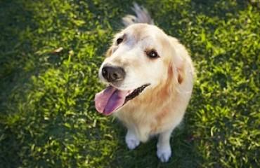 Keep Your Pet Feeling Cool | Glen Iris Vet